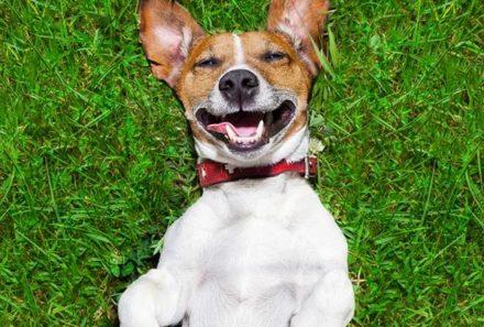 CBD Use in Pets